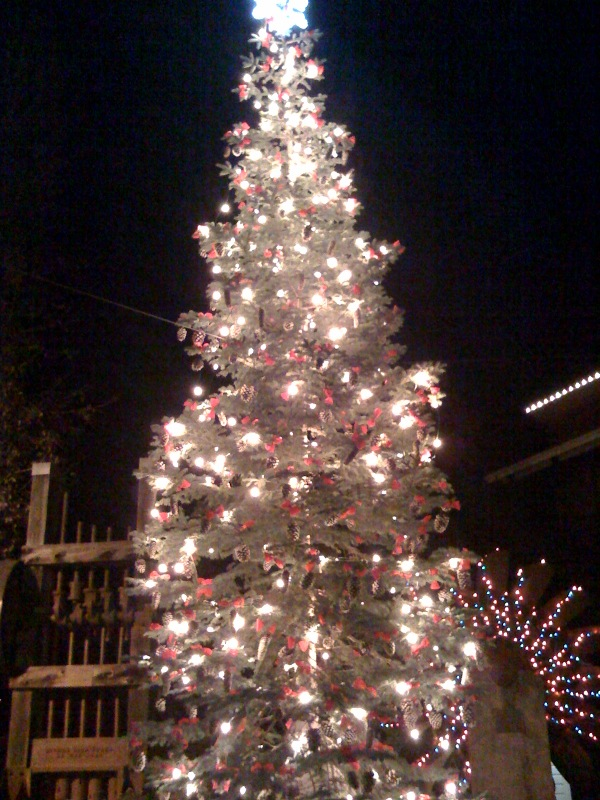 Christmas trees in Auburn, Nevada City, Truckee and Yosemite ...