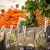 Farm Fresh Food: Where to get it