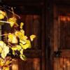 Amador Vintners presents Behind the Cellar Door on March 2-3