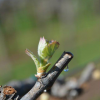 From Grapes to Glass: Life Cycle of a Wine Grape