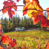 Sierra Vintners' Fall Wine Trail is October 12-13